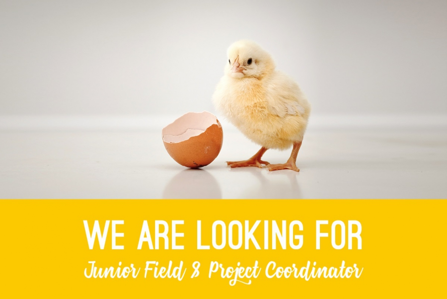 The EGG Brussels & Event Lounge are looking for a Junior Field & Project Coordinator
